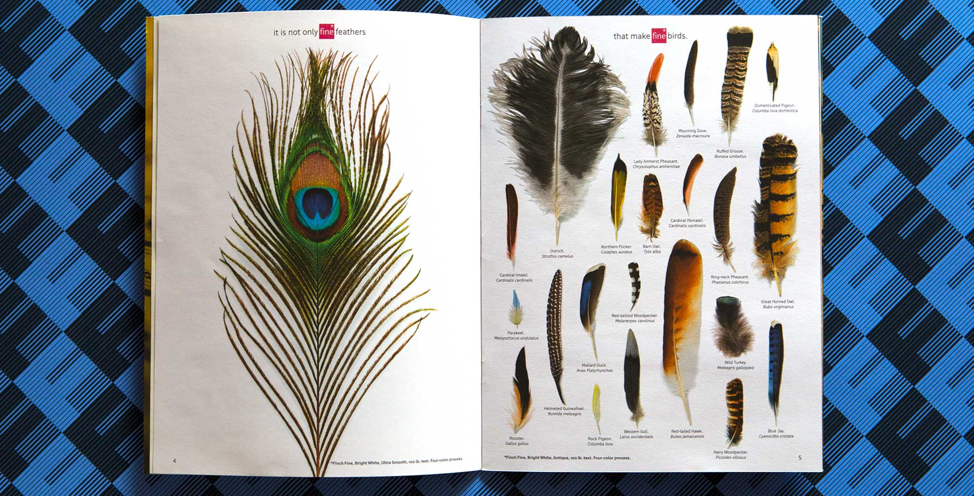 fine feathers make fine birds essays Free essays on it is not only feathers that make fine birds get help with your writing 1 through 30.